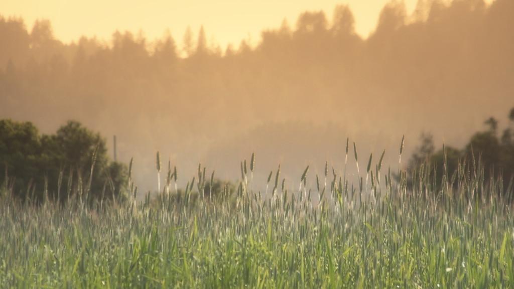 Lake Sonoma 50 - grassy field